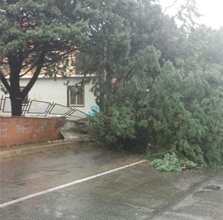 alberi caduti4