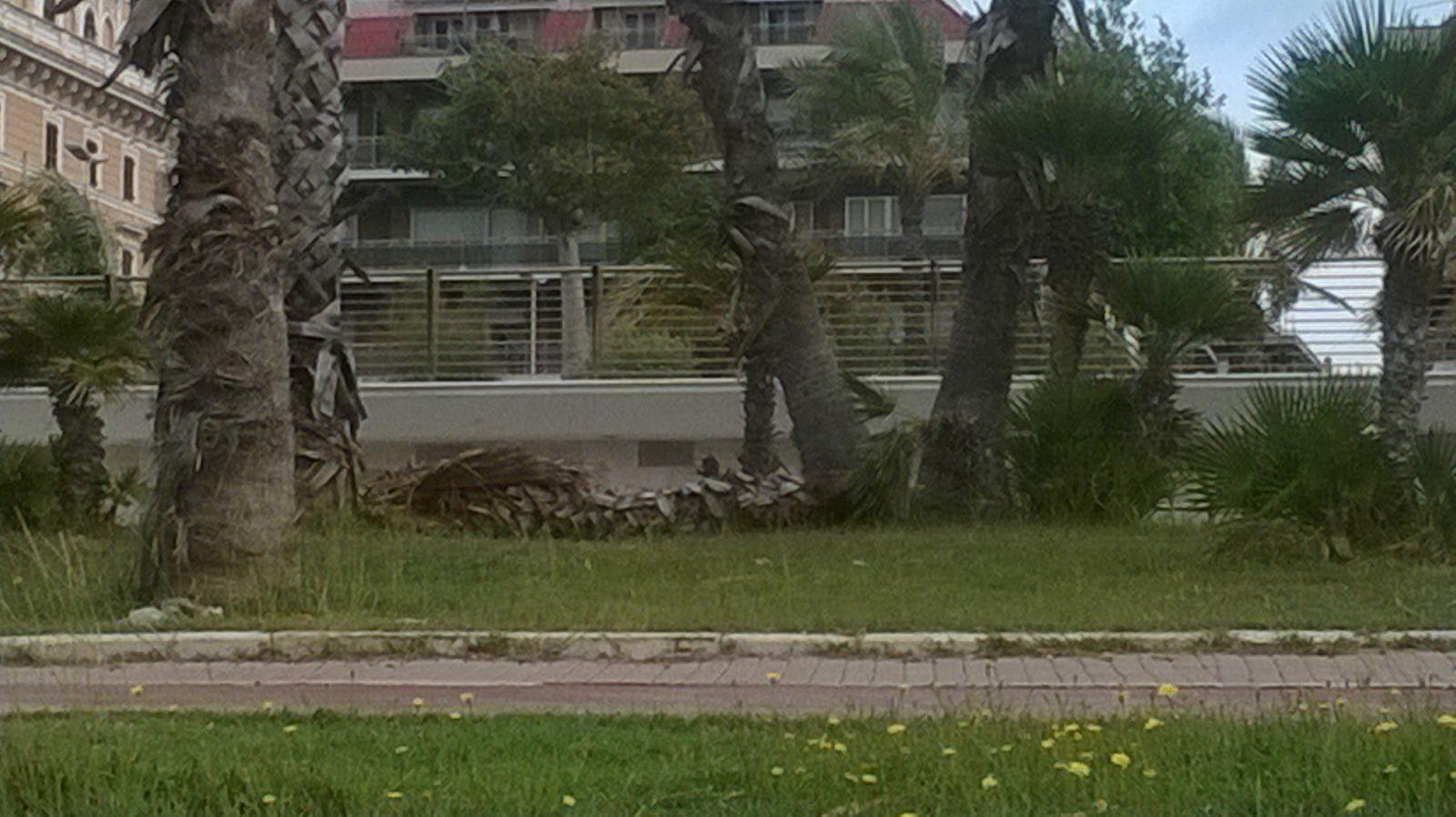 palma caduta (2)