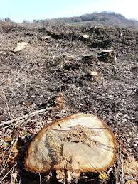 taglio alberi villanova