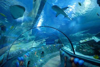 acquario roma