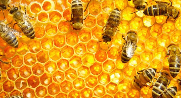 api-favi-miele