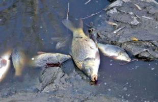 moria pesci-3-2