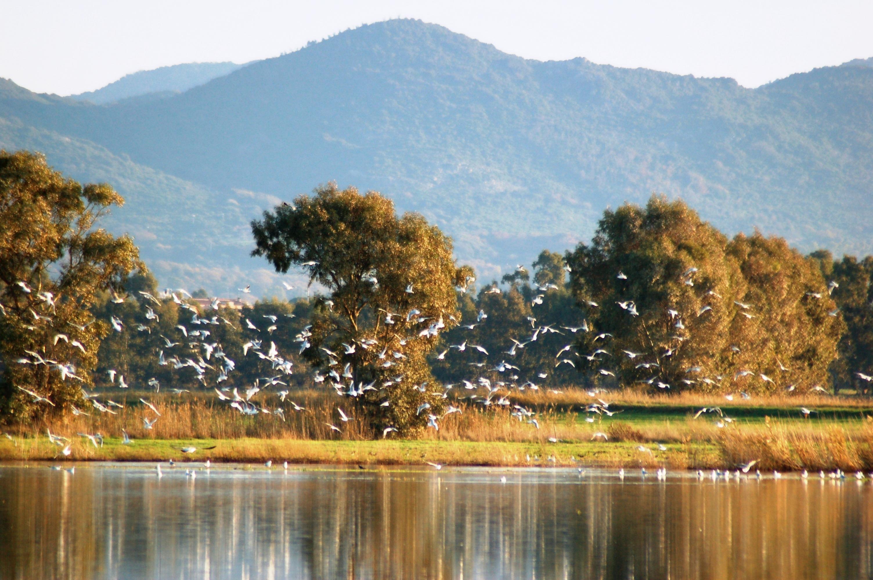 riserva naturale macchiatonda