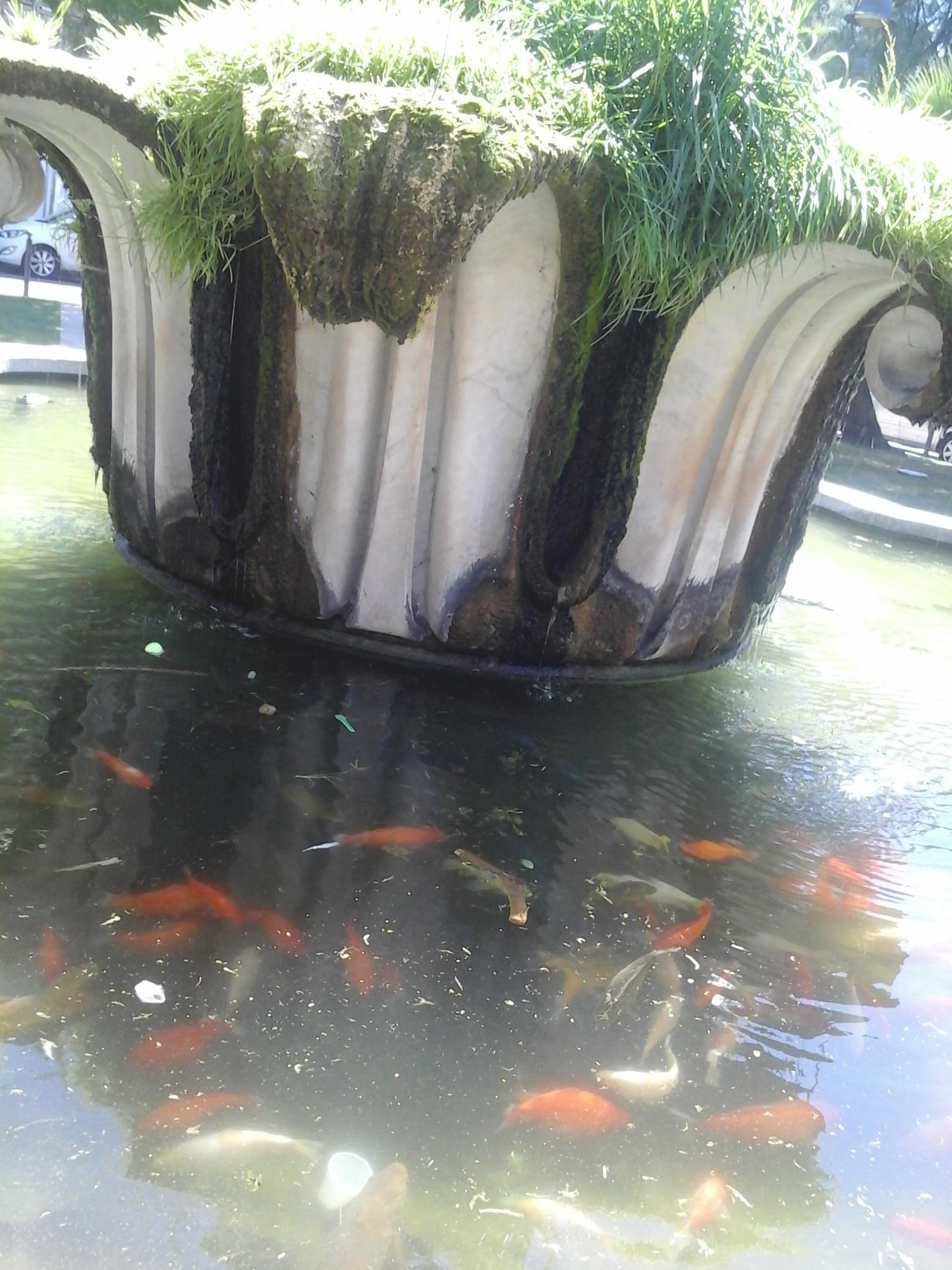 fontana del capitello ladispoli