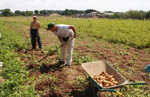 coop alice agricoltura sociale