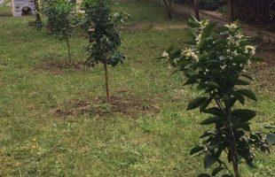 piantumazioni alberi rotary