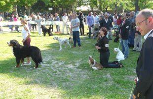 mostra canina viterbo
