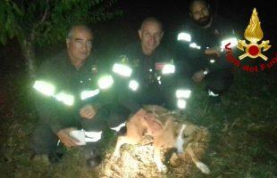 vigili fuoco cane da caccia
