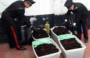 carabinieri sequestro ricci
