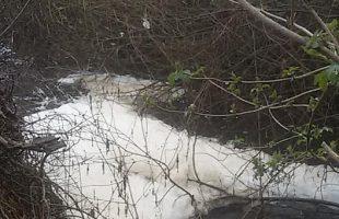 fiume marta inquinato