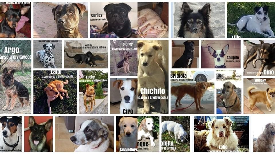 Animali smarriti e scomparsi a Civitavecchia e dintorni